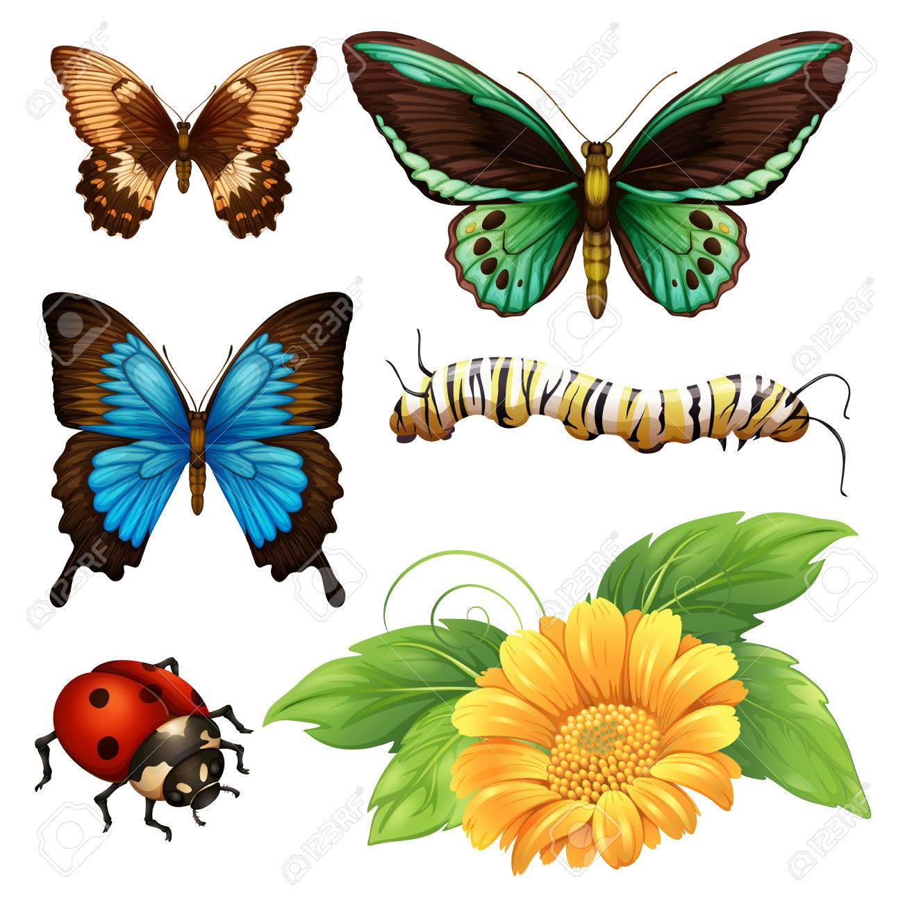 different kind of butterflies and bugs illustration royalty free