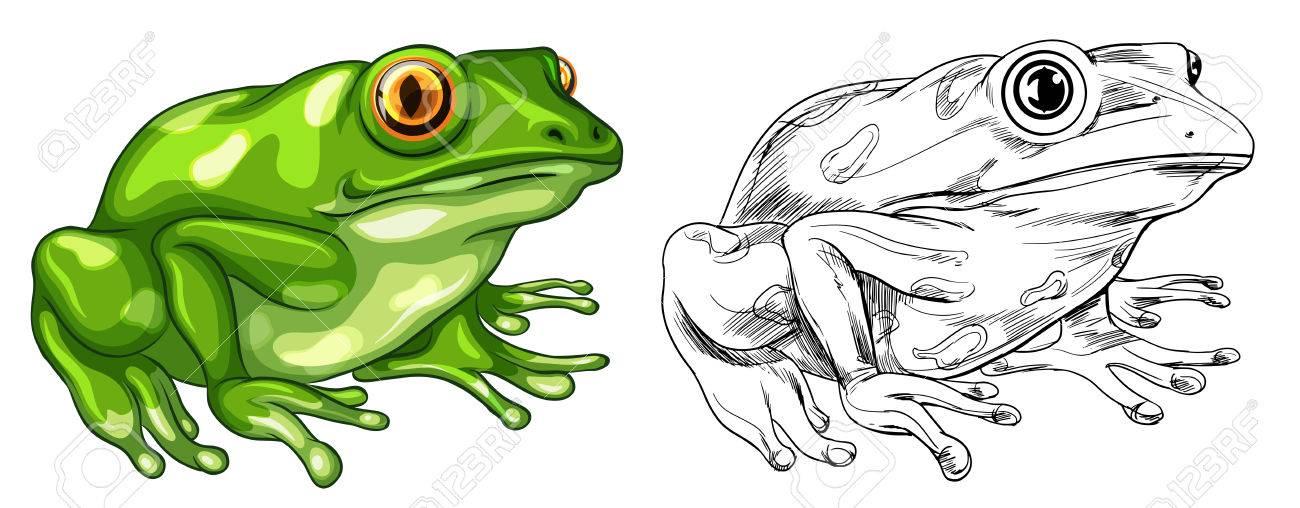 Redacción Y Imagen De Color Con La Ilustración De La Rana ...