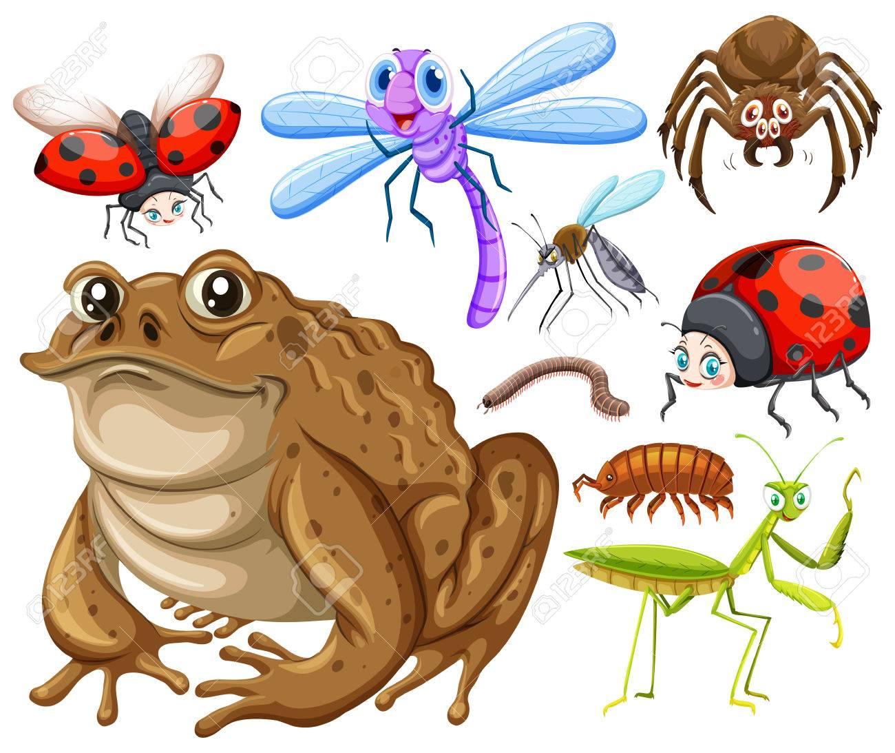 昆虫イラスト種類のイラスト素材ベクタ Image 58804680