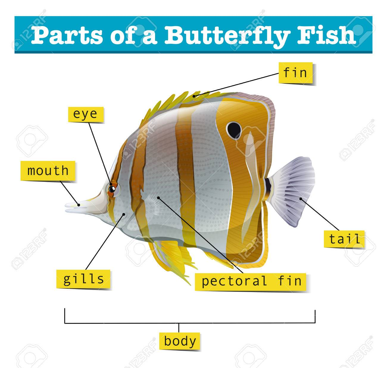 Diagram of different parts of fish illustration royalty free diagram of different parts of fish illustration stock vector 59887242 pooptronica
