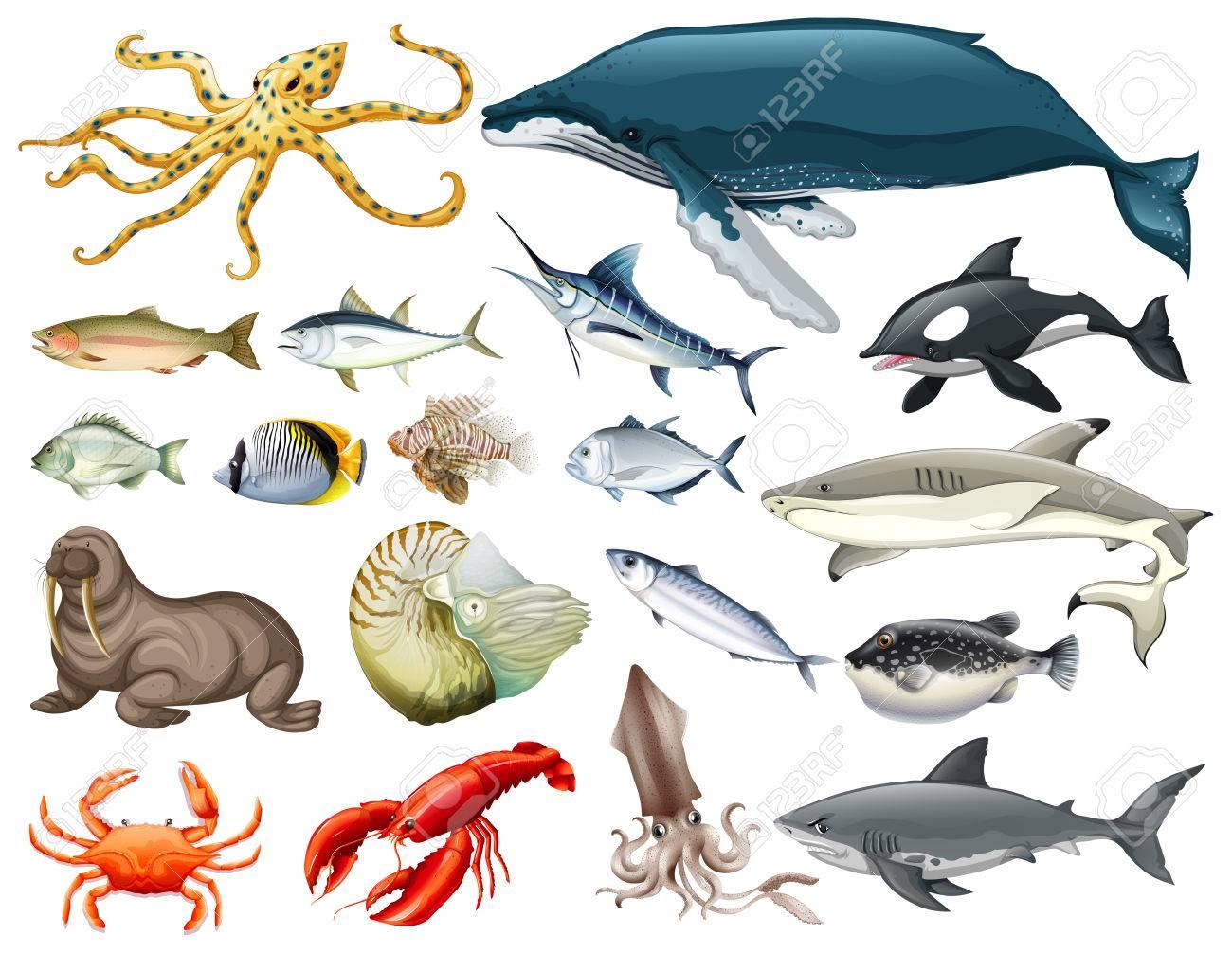 Set of different types of sea animals illustration - 59887153
