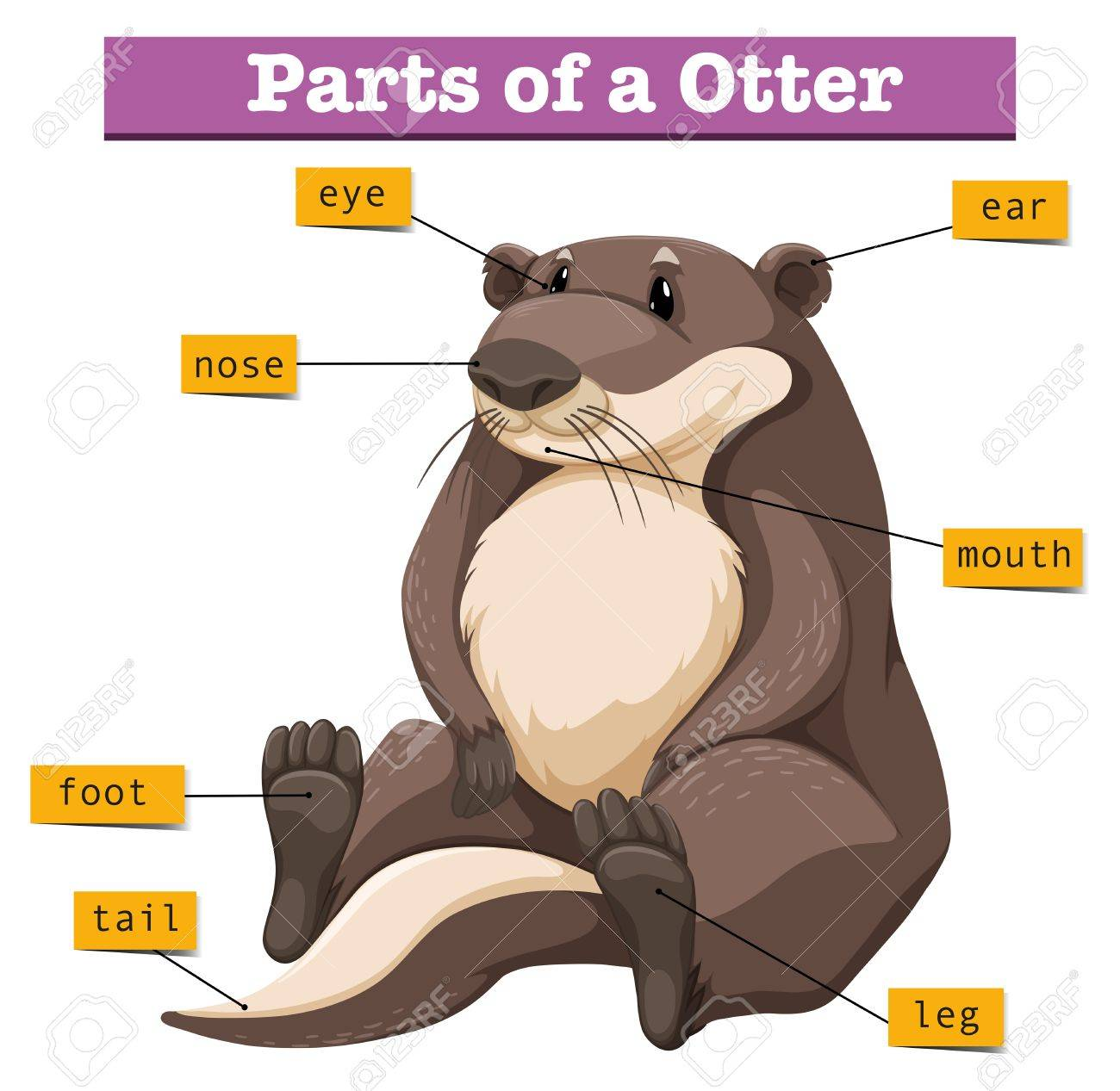 Otter Feet Diagram - Electrical Work Wiring Diagram •