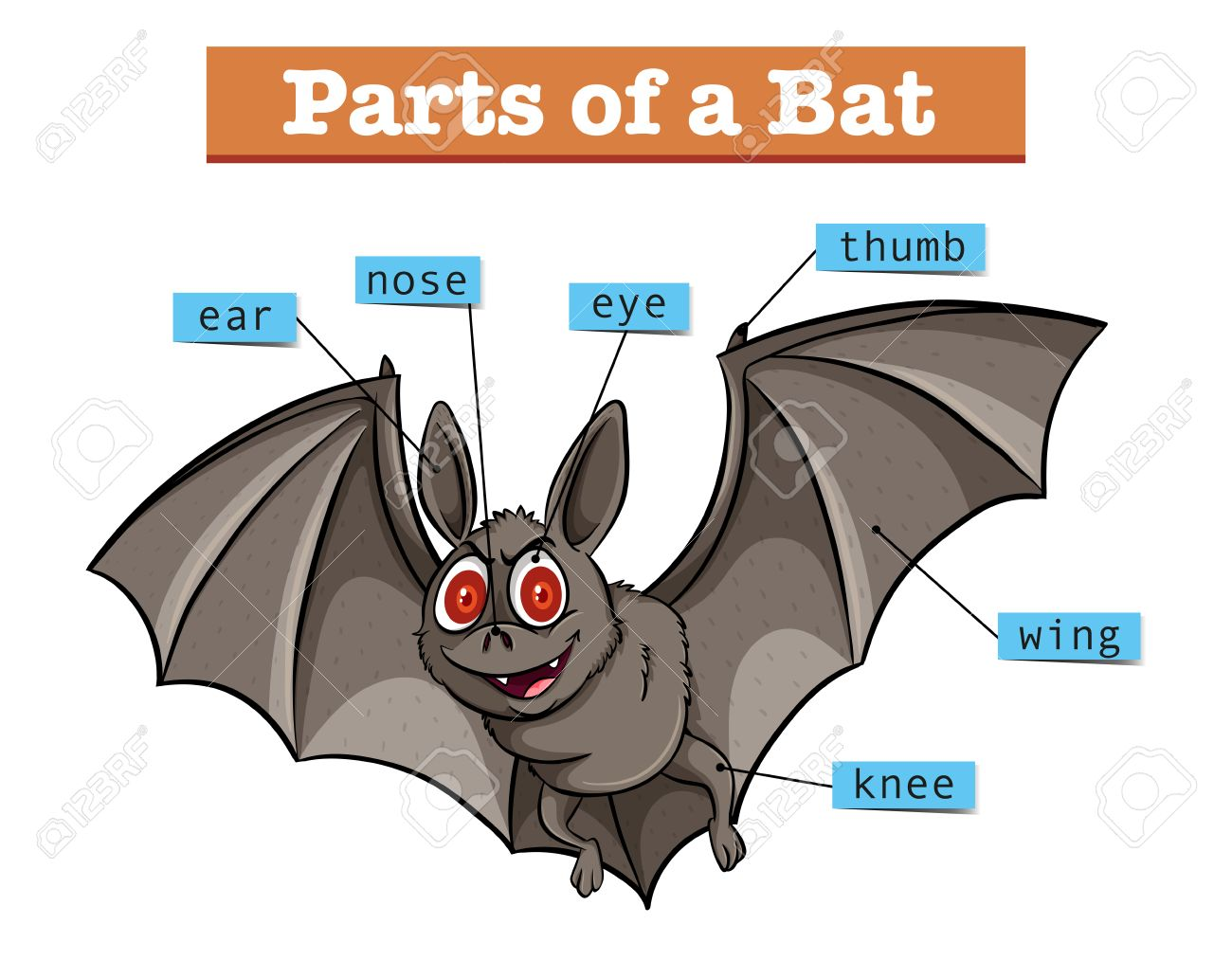 Diagram showing parts of bat illustration royalty free cliparts diagram showing parts of bat illustration stock vector 61180620 pooptronica Images