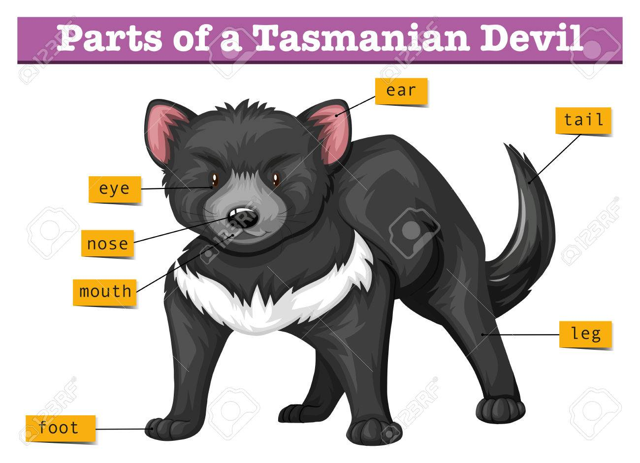 Labelled Diagram Of Tasmanian Devil - Block And Schematic Diagrams •