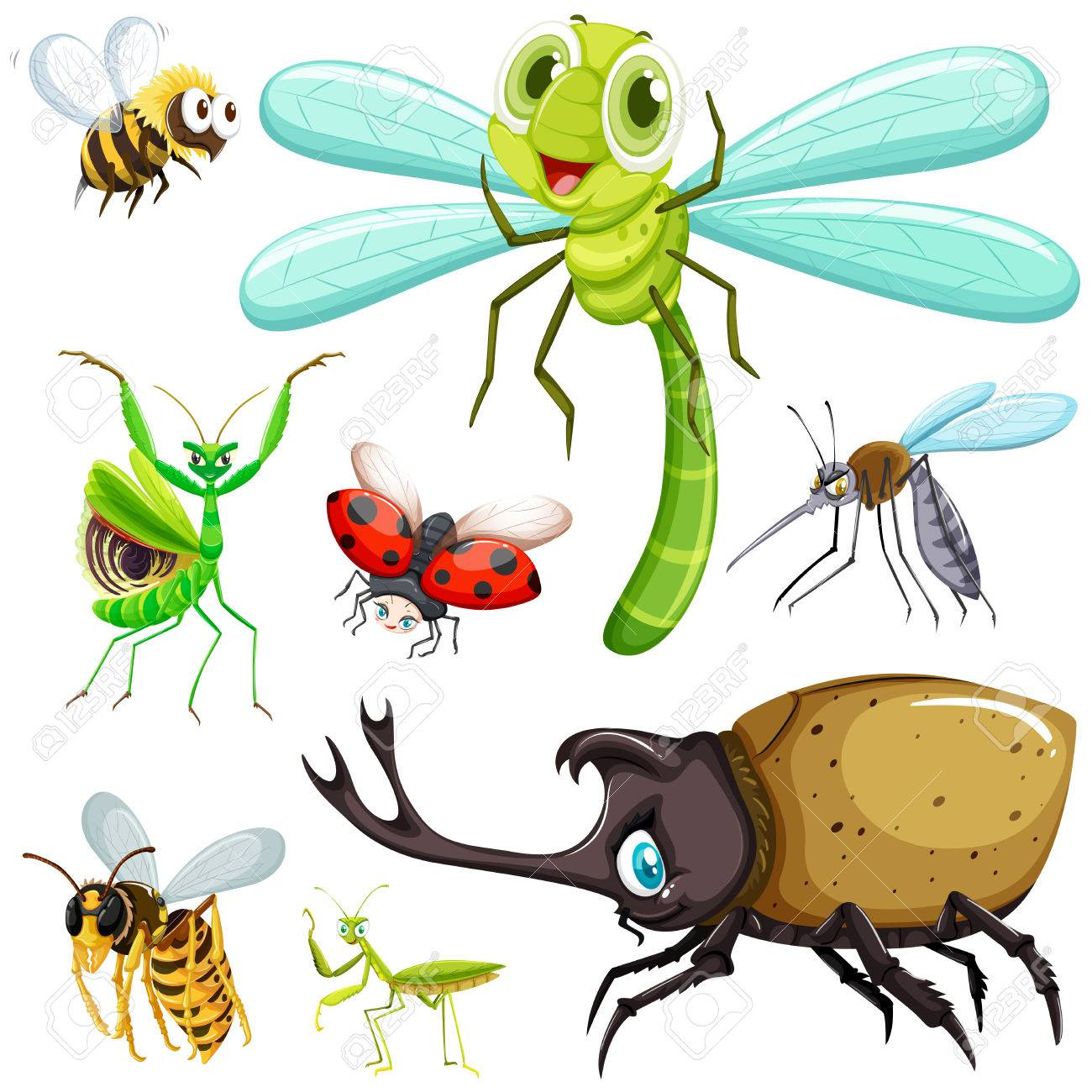 昆虫イラスト種類のイラスト素材ベクタ Image 61350359