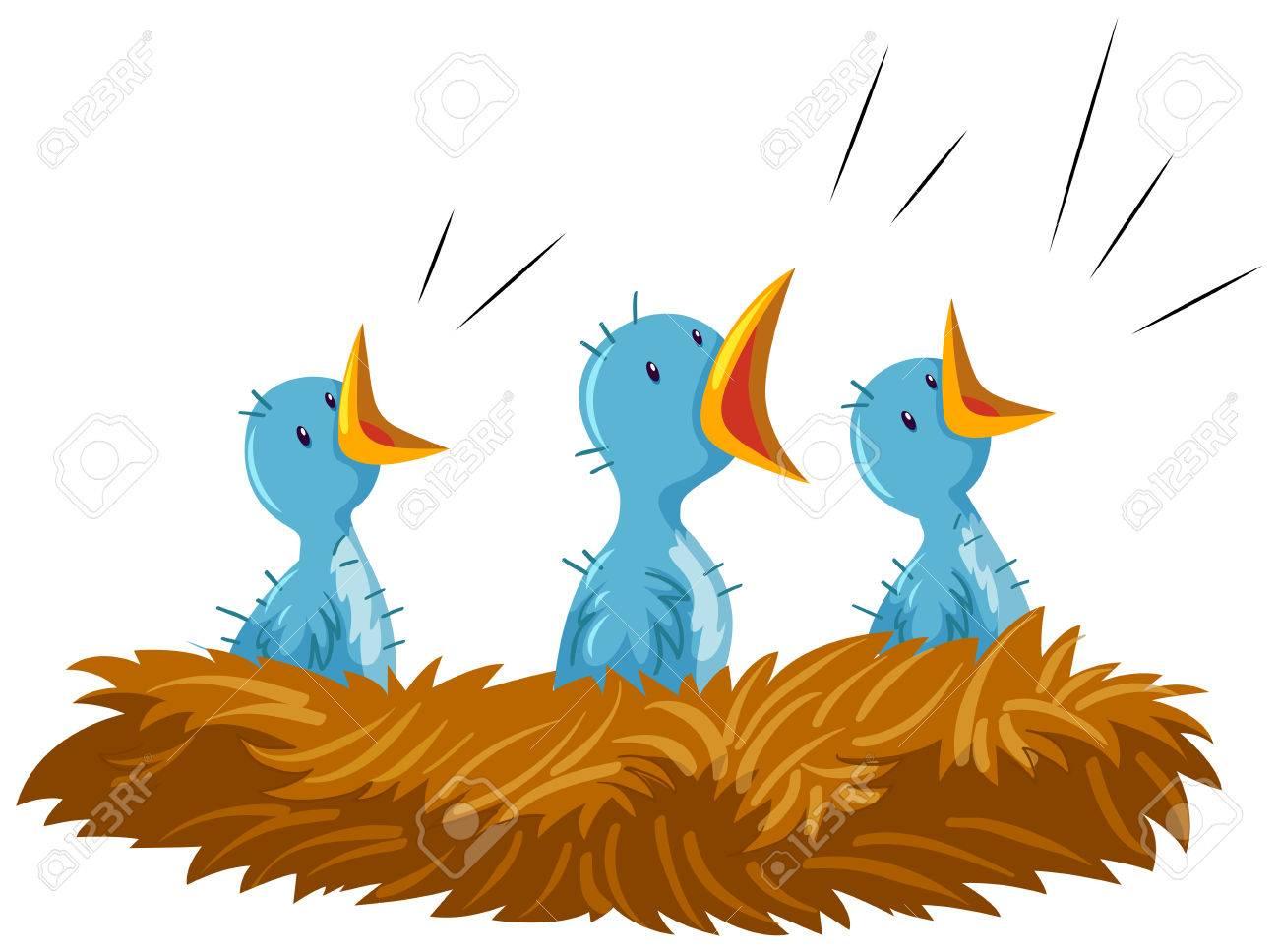 three baby birds in nest illustration royalty free cliparts vectors rh 123rf com baby bird clipart free baby blue bird clipart