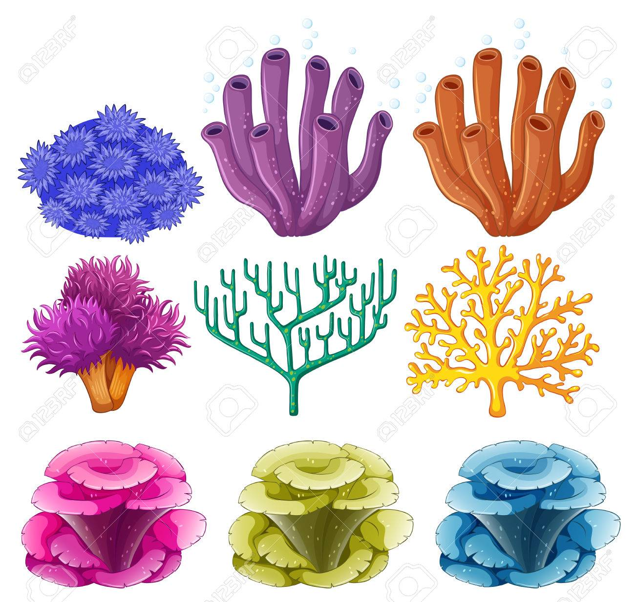 Different types of coral reef illustration royalty free cliparts different types of coral reef illustration stock vector 68435618 publicscrutiny Images