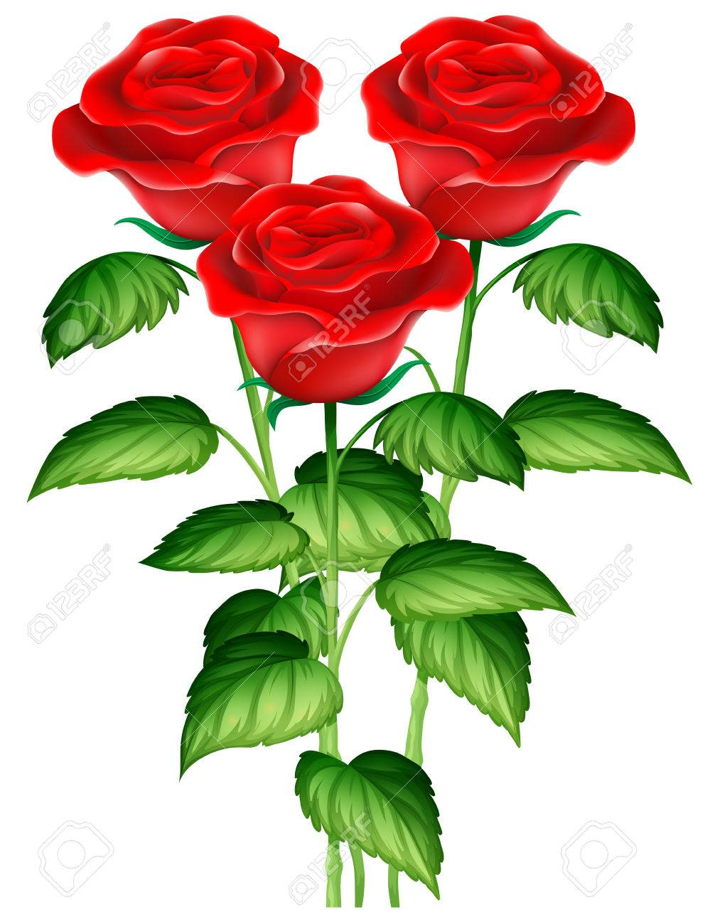 Tres Hermosas Rosas Rojas Ilustración Ilustraciones Vectoriales