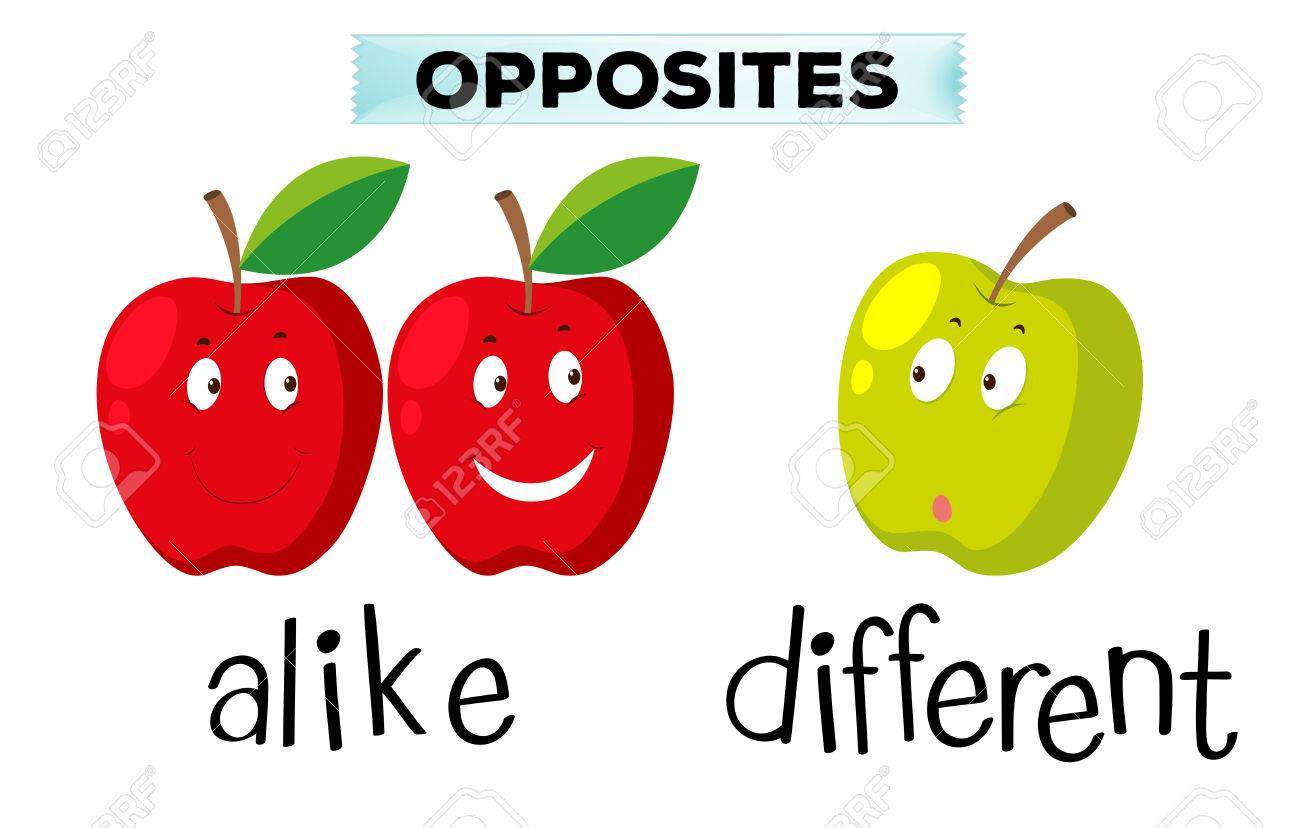 Opposite words for alike and different illustration Stock Vector - 70646486