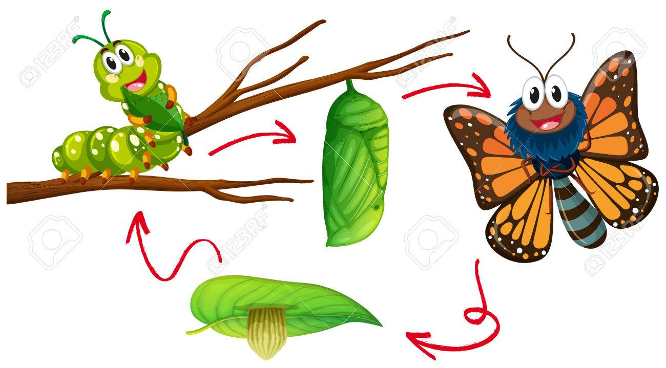 Butterfly life cycle diagram illustration royalty free cliparts butterfly life cycle diagram illustration stock vector 76425066 ccuart Images