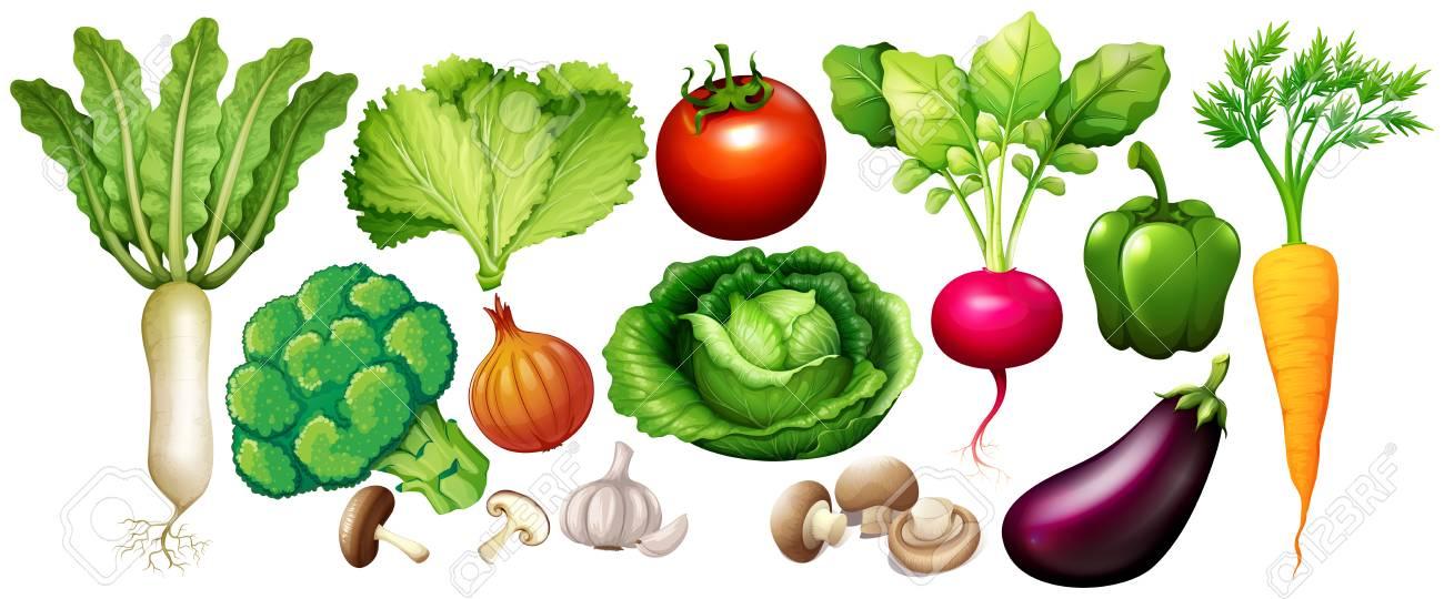 野菜イラストの種類のイラスト素材ベクタ Image 76572900