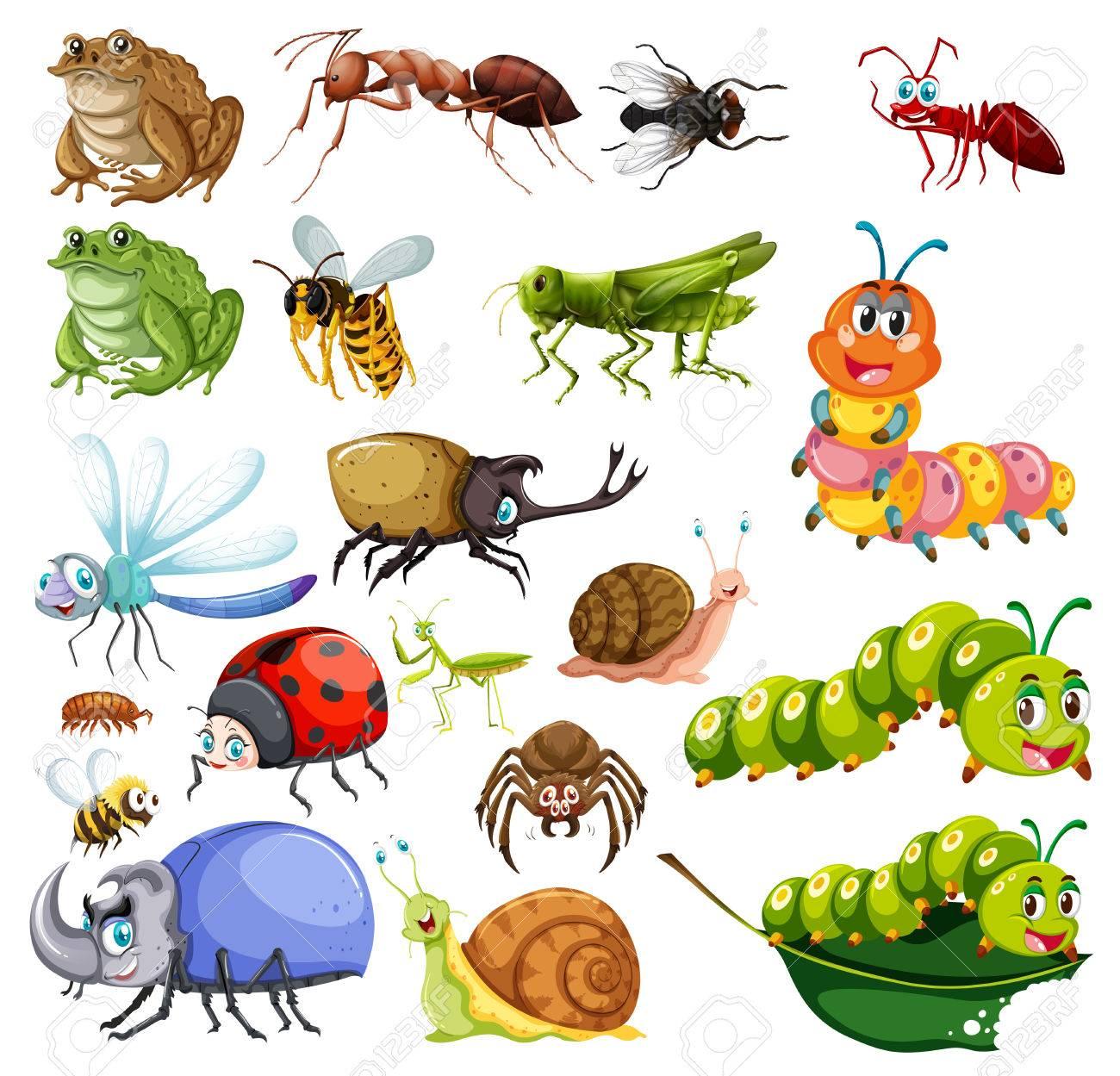 昆虫イラスト種類のイラスト素材ベクタ Image 77010796