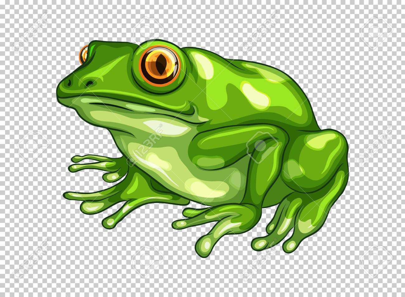 green frog on transparent background illustration royalty free rh 123rf com clipart transparent background clip art with transparent background free