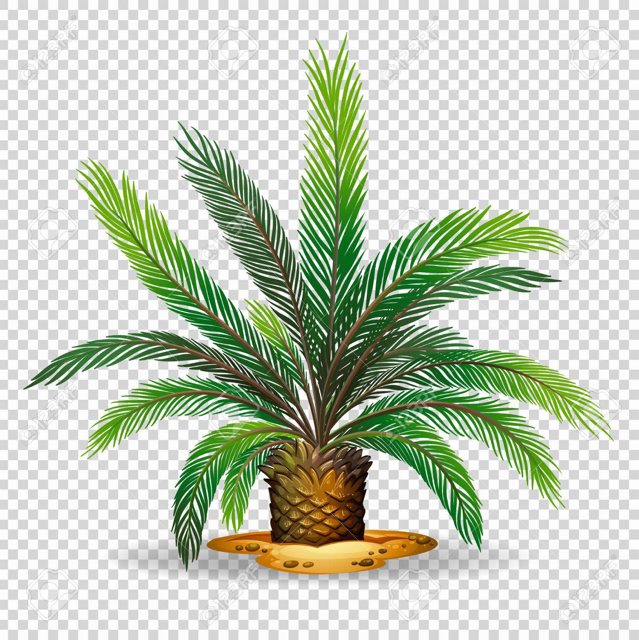 palm tree on transparent background illustration royalty free rh 123rf com free clipart with transparent background christmas clipart with transparent background