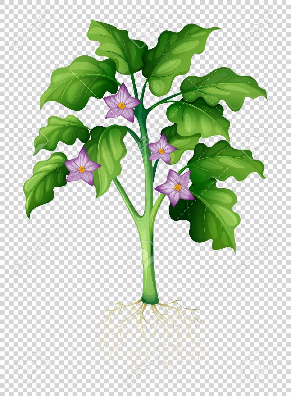 Eggplant Tree On Transparent Background Illustration Royalty Free