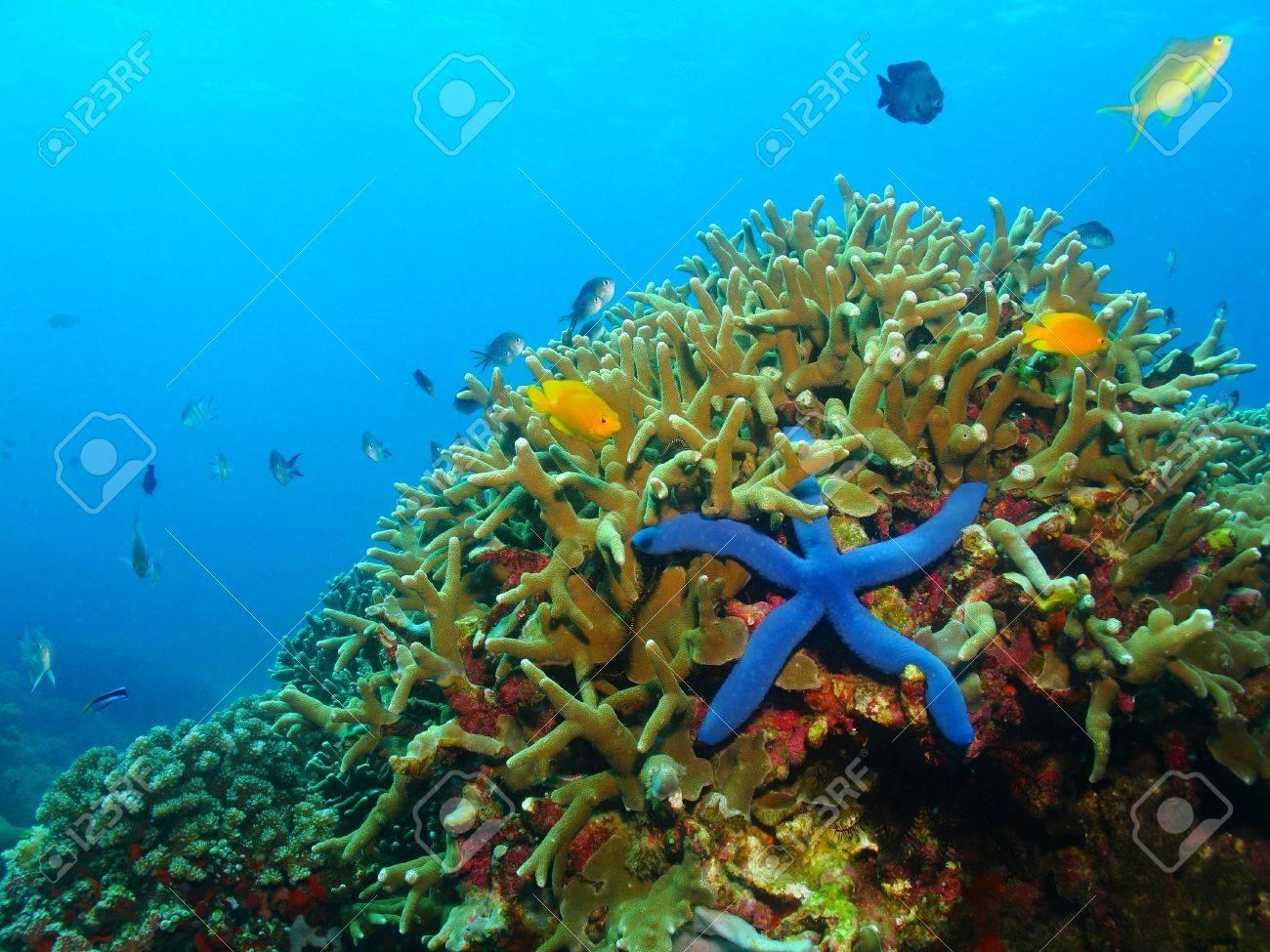 0ee6d94473af Colorful Underwater Coral Reef With Blue Sea Star