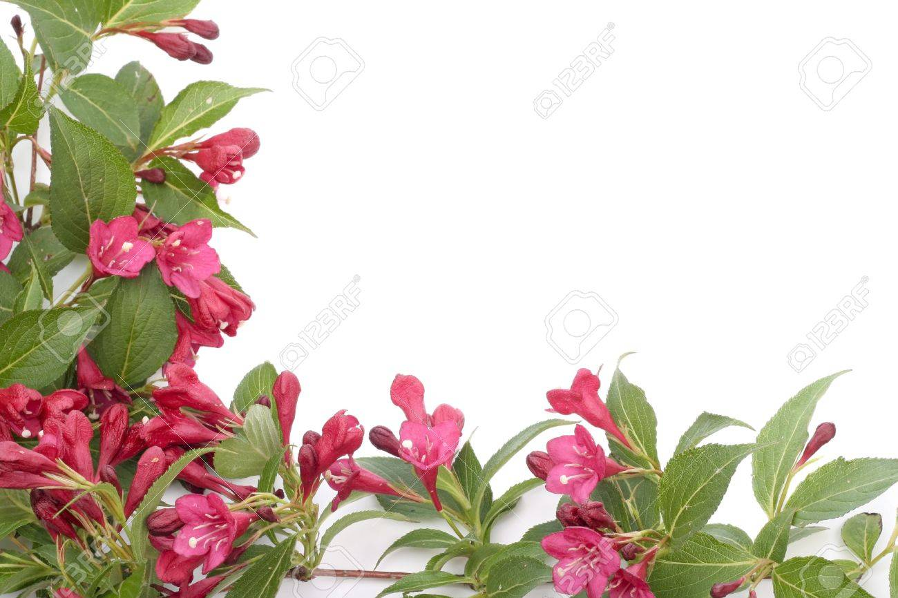 Red Bell Shaped Flowers Over White Background Stock Photo Picture