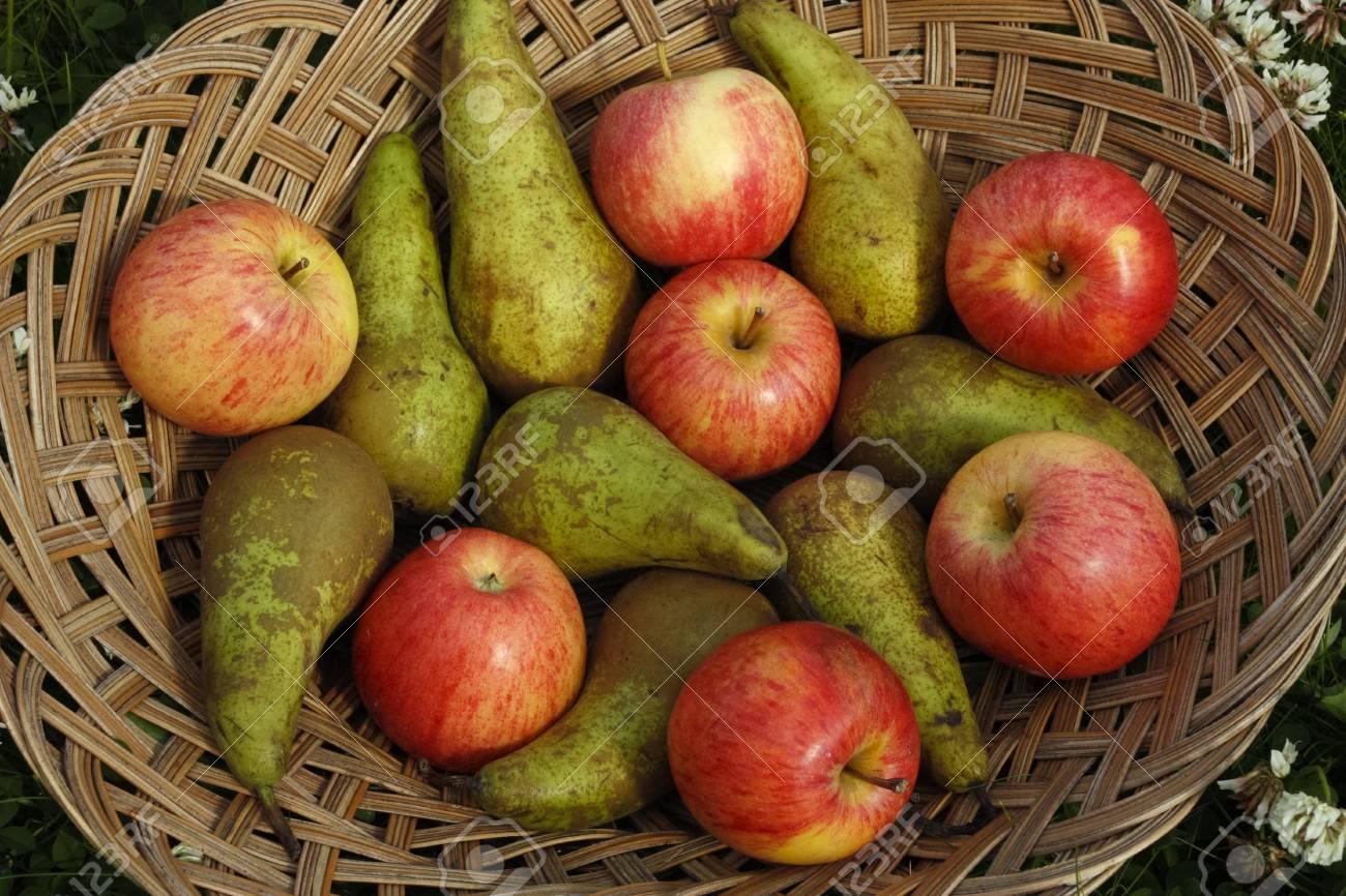 Mixed fruit on basket outdoors Stock Photo - 13831842