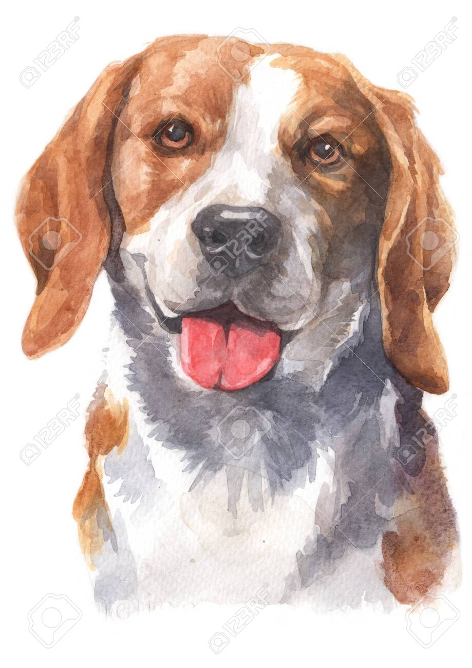 Water Colour Painting Of Beagle Dog Stock Photo Picture And Royalty Free Image Image 134839105