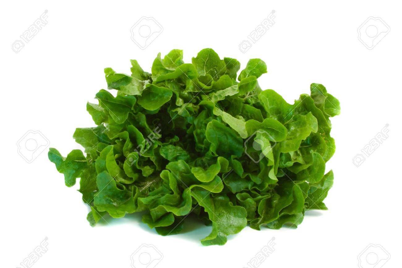 Oak Leaf Lettuce isolated over white background. Stock Photo - 5872810