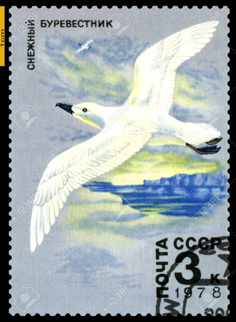 RUSSIA - CIRCA 1978  a stamp printed by Russia shows   Whitewinged Petrel,  Antarctic Fauna,  circa 1978 Stock Photo - 21928060