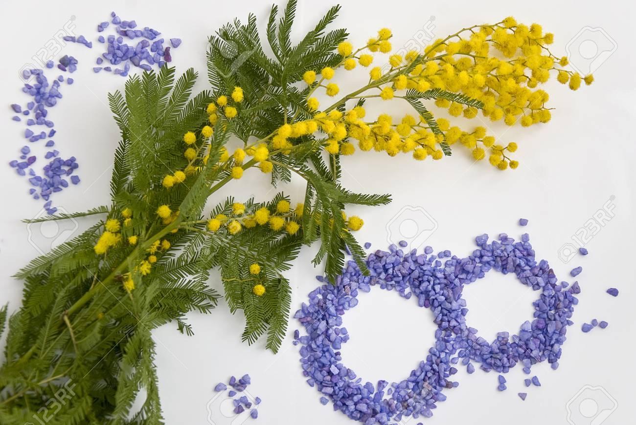 International Women s Day mimosa flower - 26539382