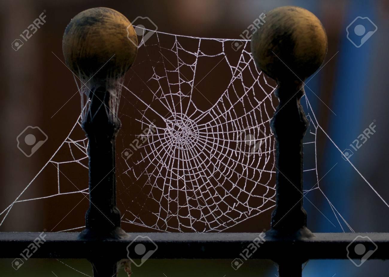 Zwei Spiders Web Auf Zaun Beitrage Von Eiskristallen Aus Gefrorenem