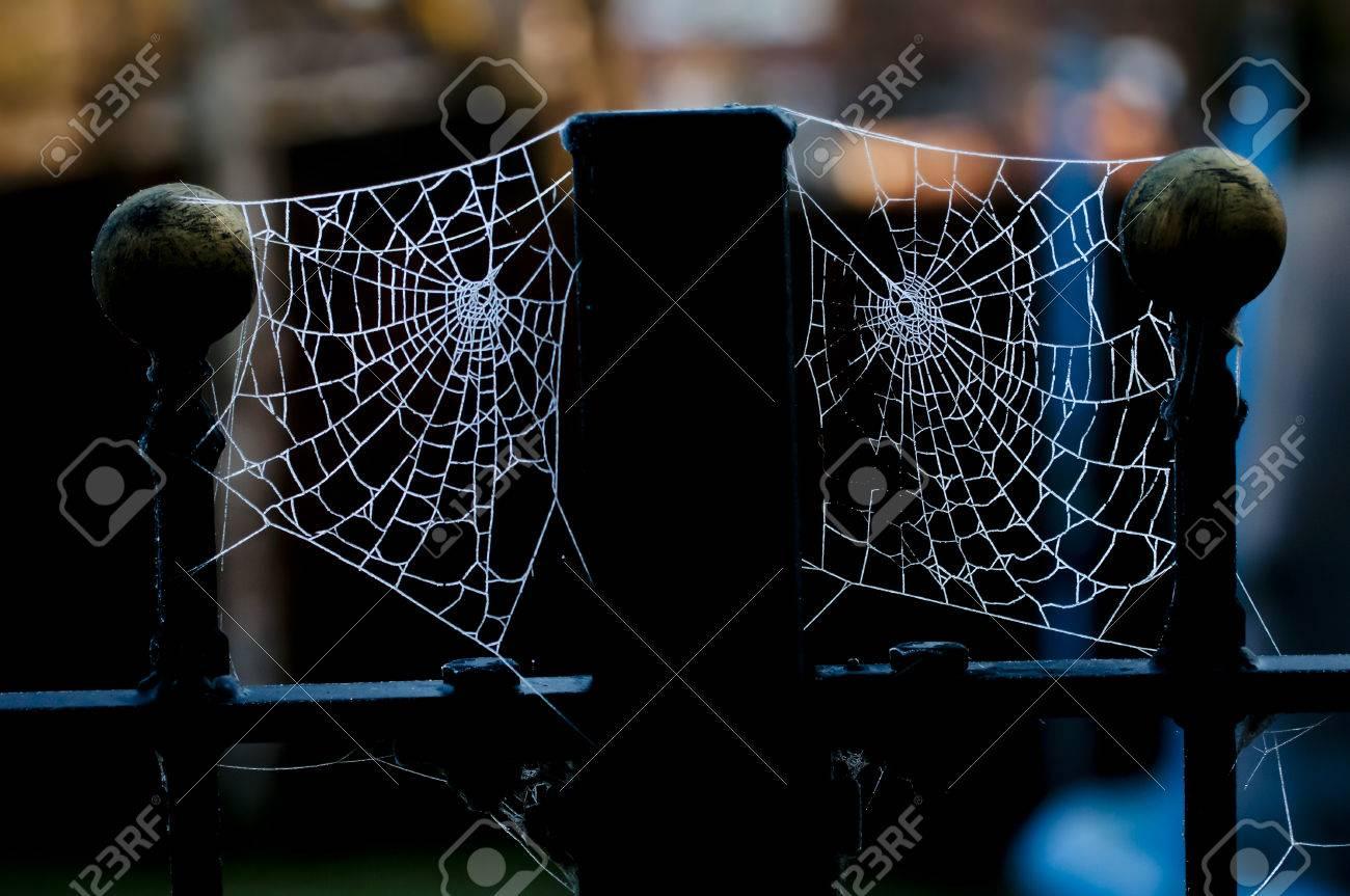 Zwei Spinnennetze Auf Zaun Beitrage Von Eiskristallen Aus Gefrorenem