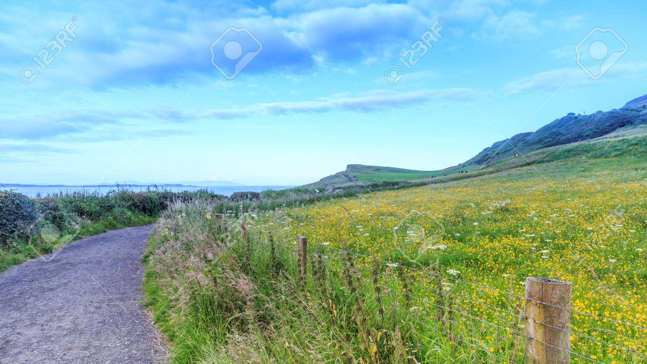 Yellow Flowers On Field At The Coast Around A Carrick A Rede