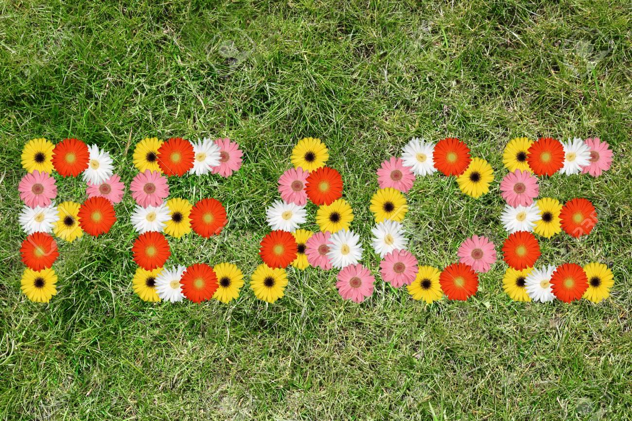 Paix Avec Fleurs Fleur Nature Printemps Nature Pre Herbe Printemps