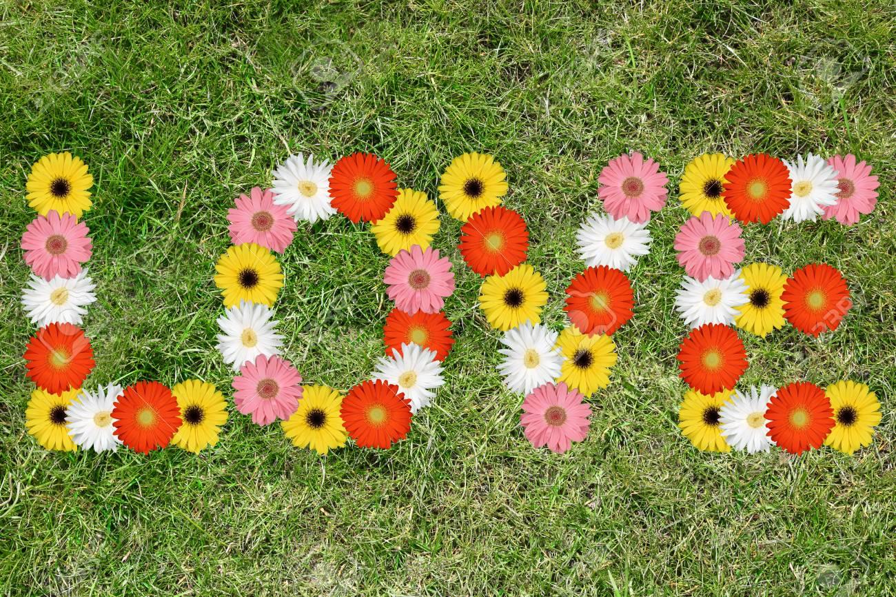 L Amour Des Fleurs Fleur Nature Printemps Pre Herbe Printemps Banque