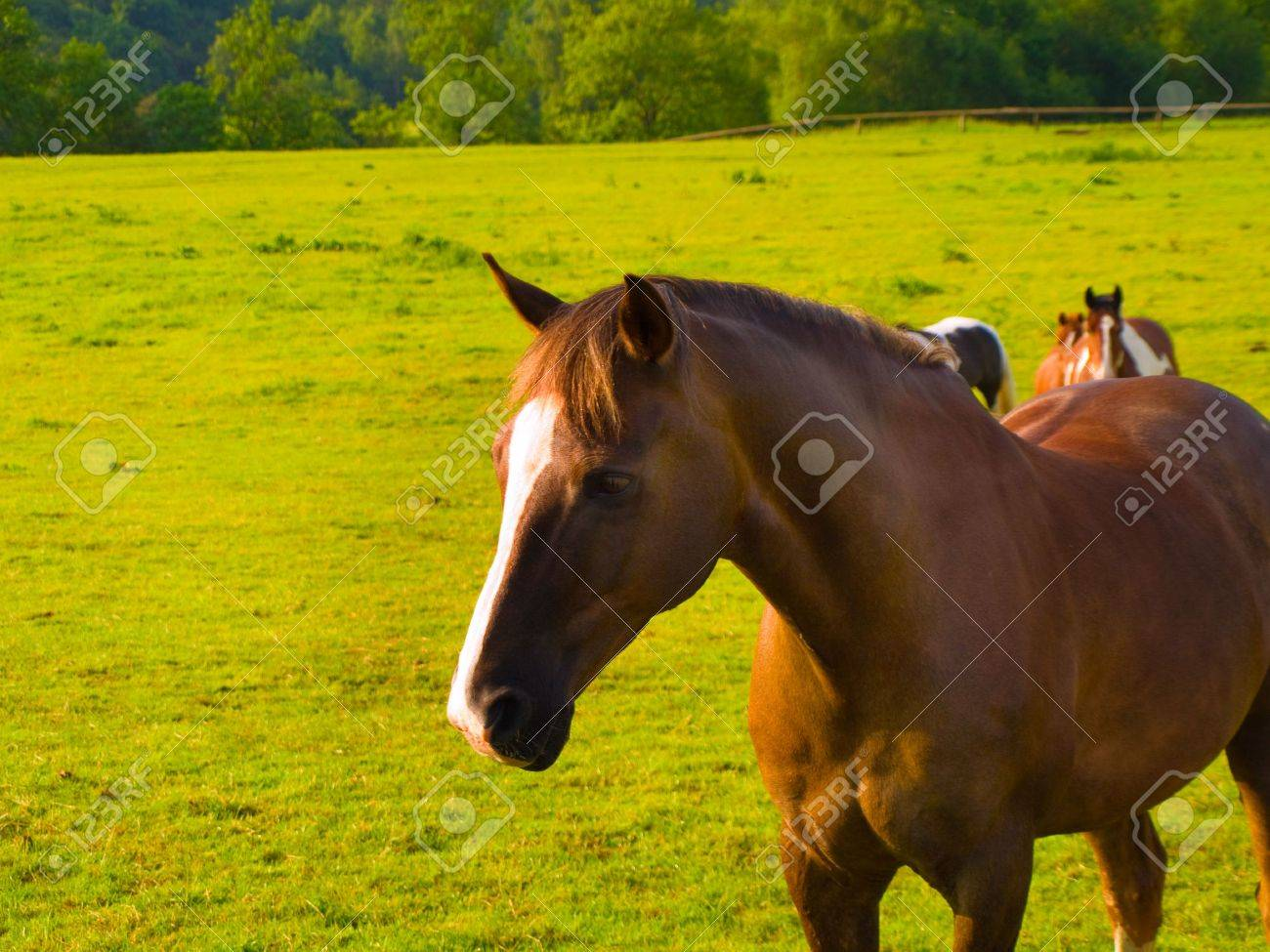 Horse in Beautiful Green Field in British Summer Morning Stock Photo - 3264811