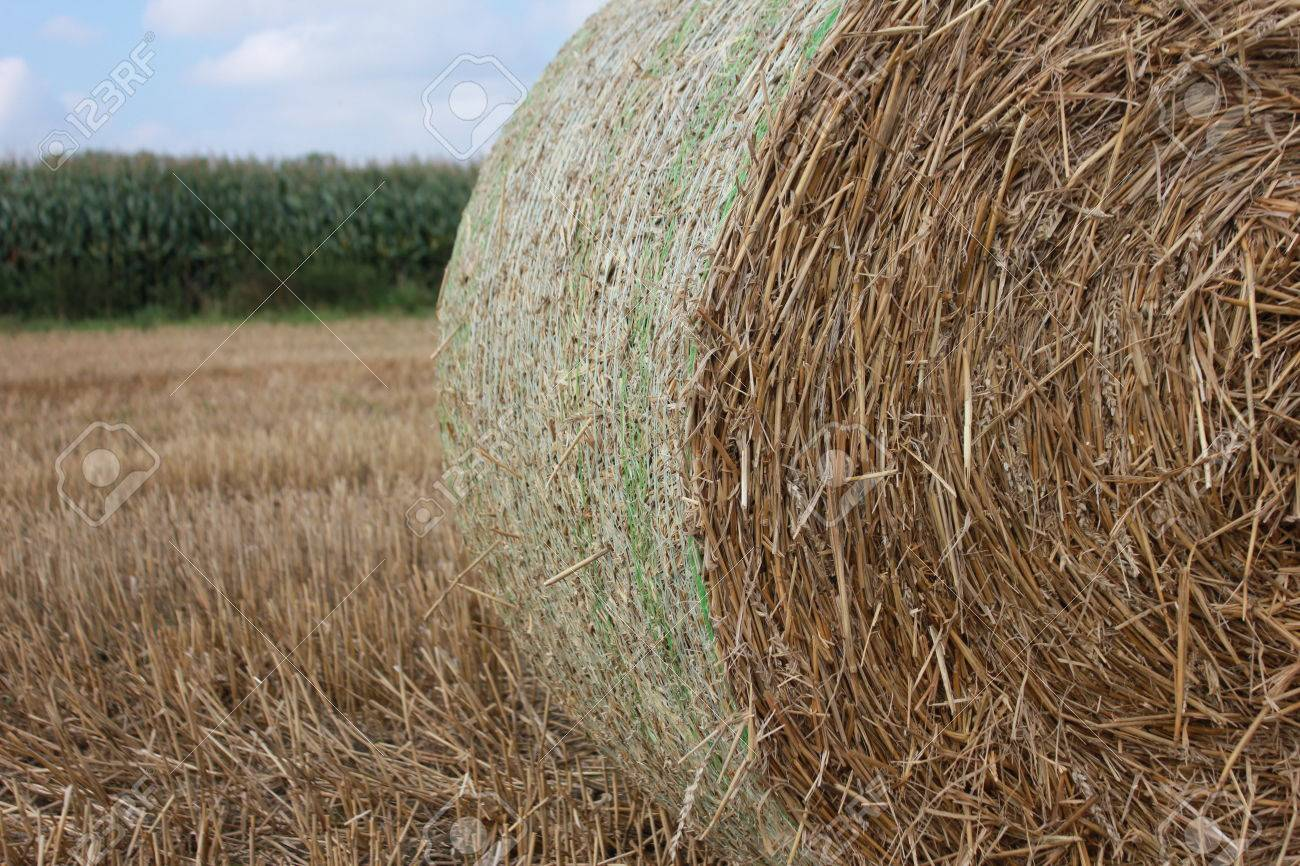 hay pelota bola de paja foto de archivo