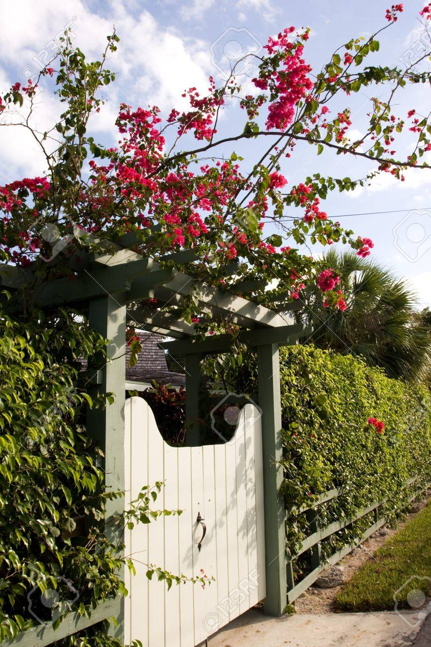 White Gate With Red Flowers And Green Hedge Stock Photo Picture And
