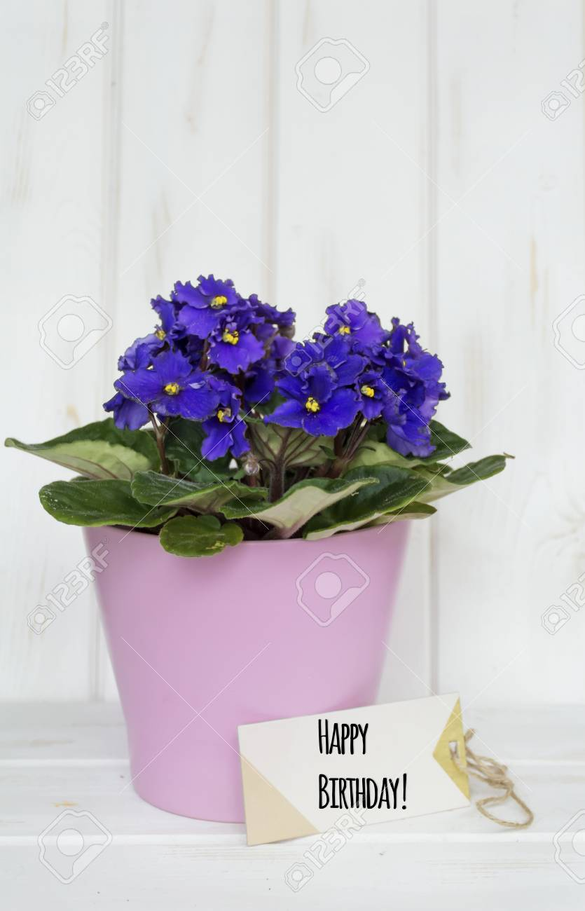 Pot Violet Flowers For Birthday Gift With Happy Birthday Message