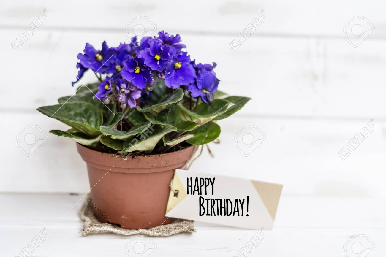 Pot violet flowers for birthday gift with message card stock photo pot violet flowers for birthday gift with message card stock photo 92251823 izmirmasajfo