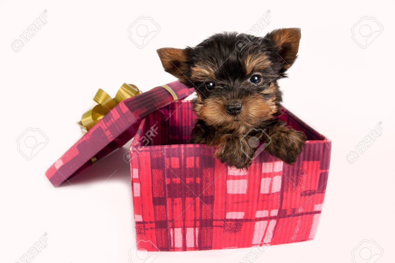 Yorkshire terrier owner gifts