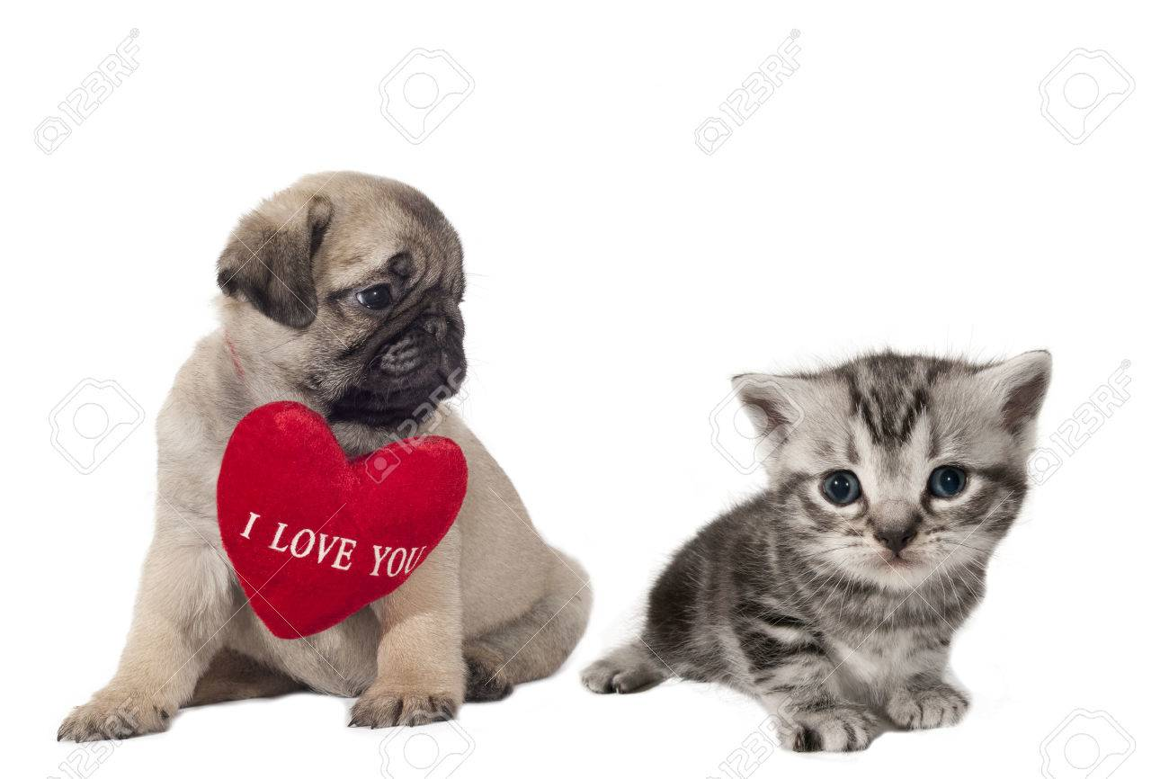 I Love You Kitten Best Cat And Kitten Image And HD 2017