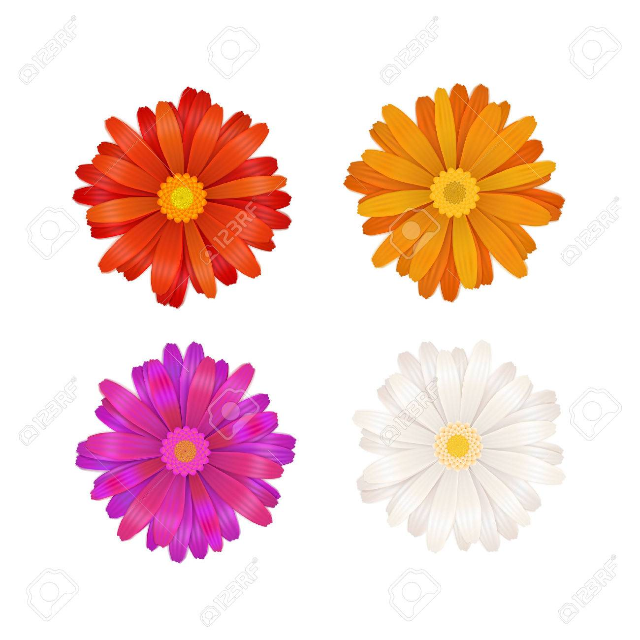Set of colourful gerbera flowers isolated on white - 54228987