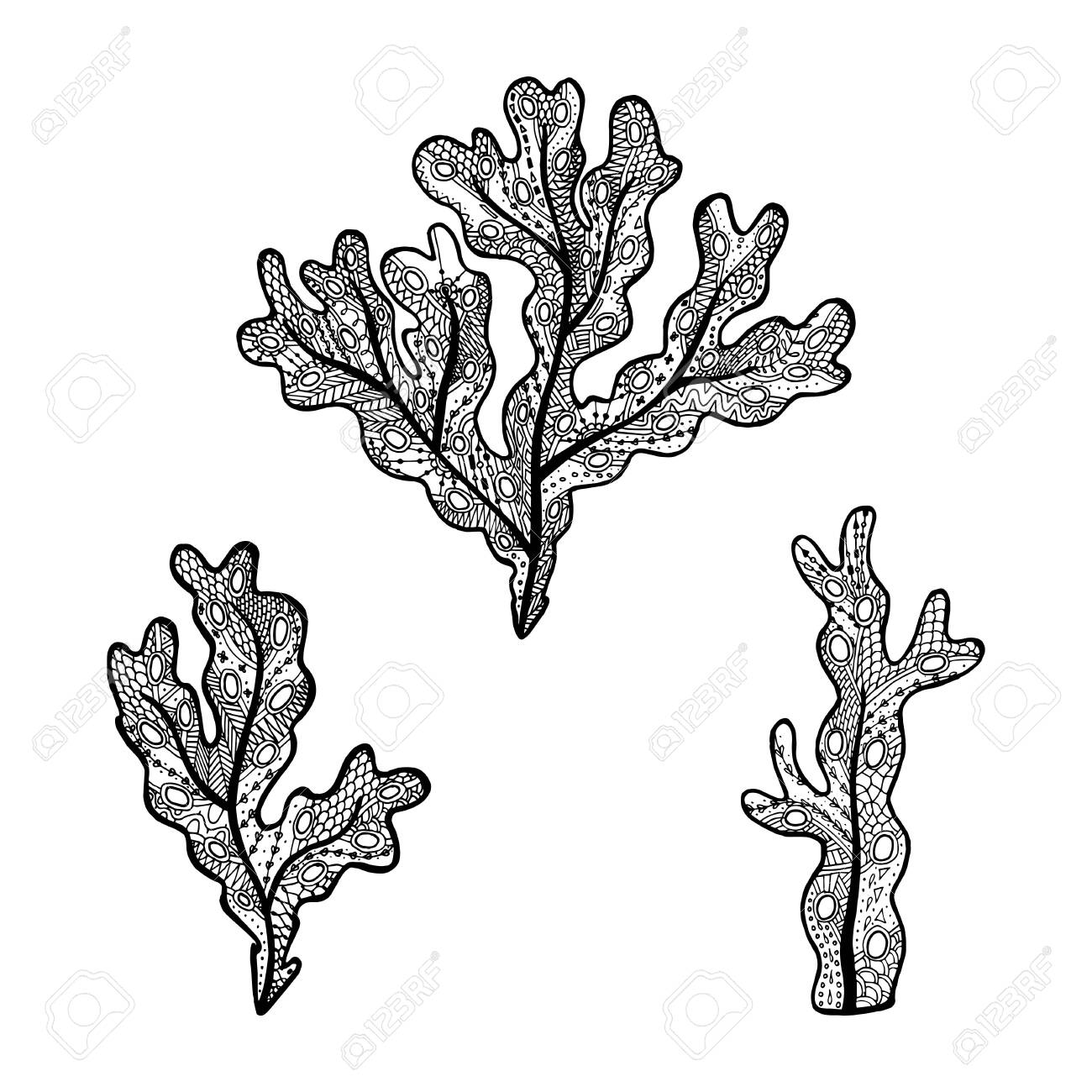 Seaweed Coloring Pages for Kids   Coloring pages, Sea plants ...   1300x1300