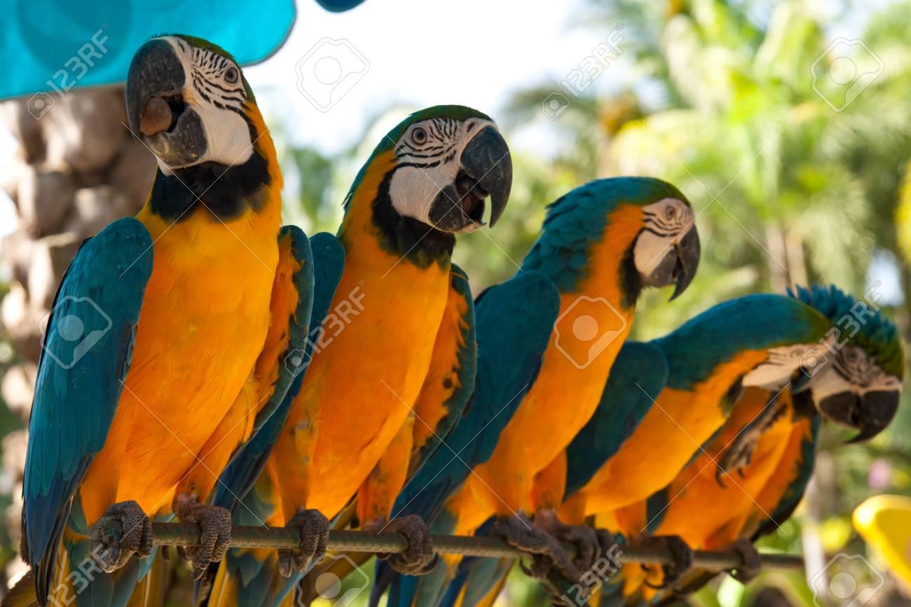 parrots Stock Photo - 12028552