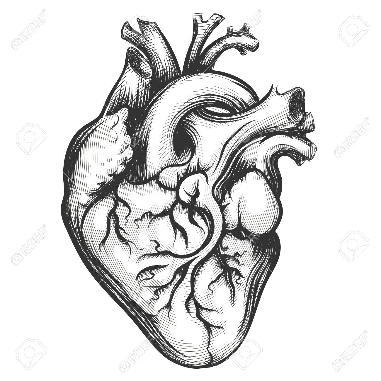 Dessin Coeur Humain coeur humain dessiné dans le style de gravure isolé sur un fond