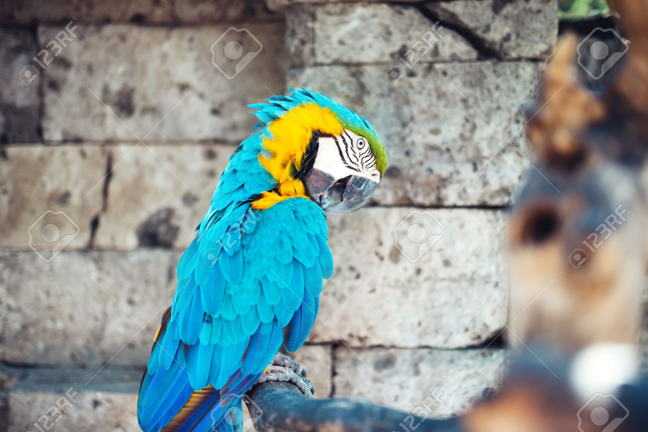 portrait of macaw parrot sitting in forest. aviary details of rainforest - 63538732