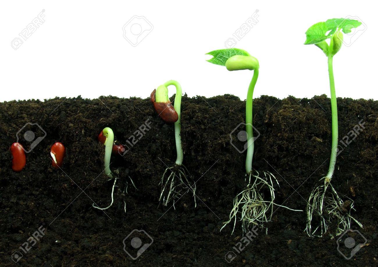 Смотреть planting seeds 2 18 фотография