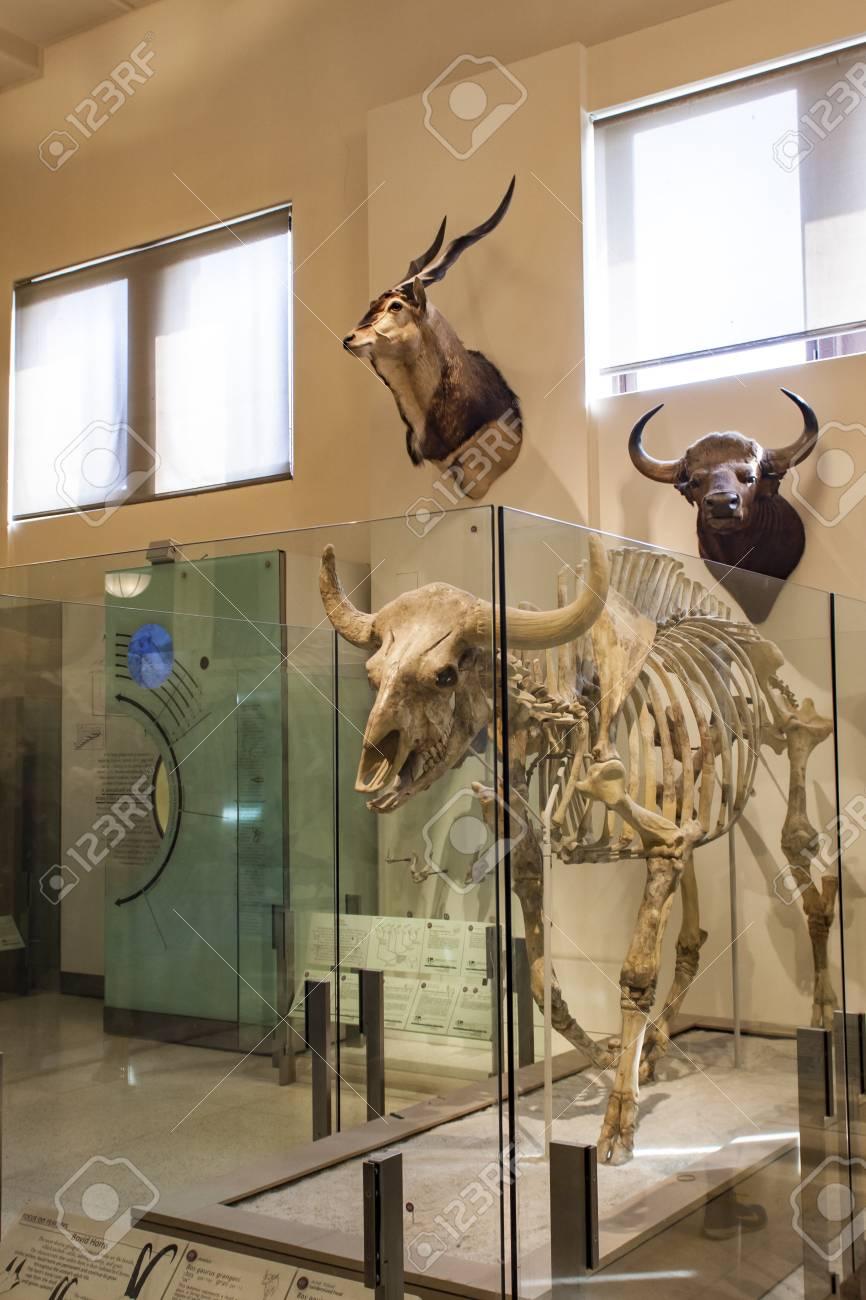 Museo Storia Naturale New York.Immagini Stock New York Usa 1 Agosto 2016 Particolare Dal