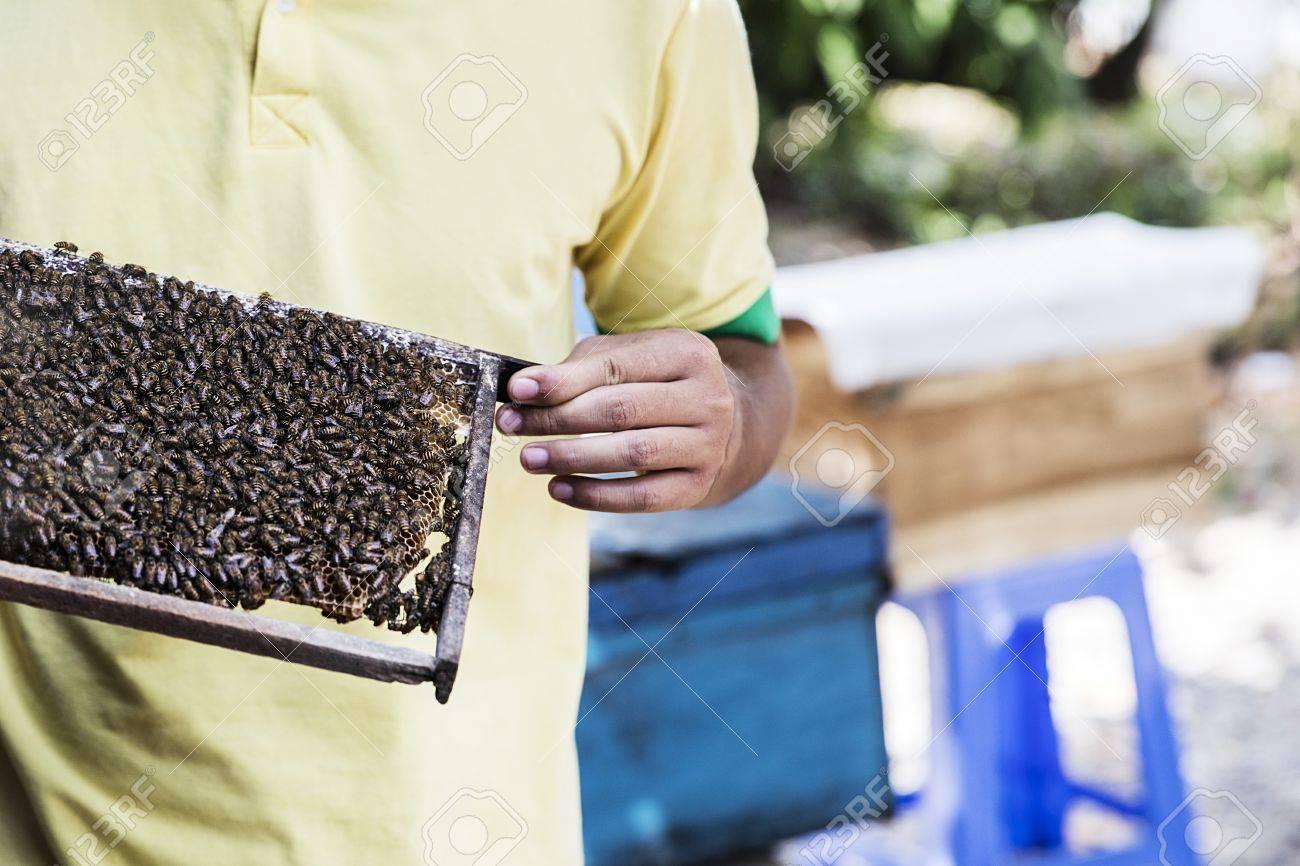 apiculteur 21