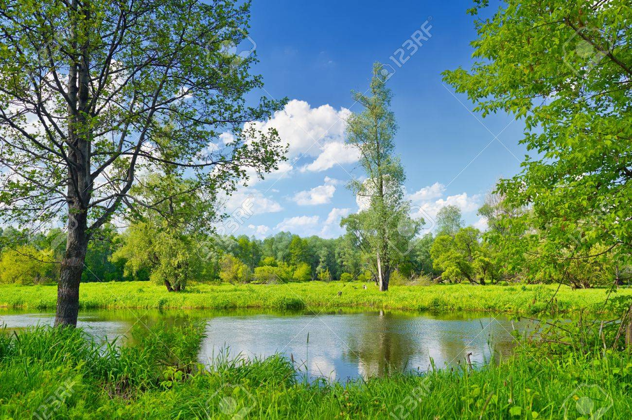 Summer landscape with lonely tree and blue sky Stock Photo - 17101754