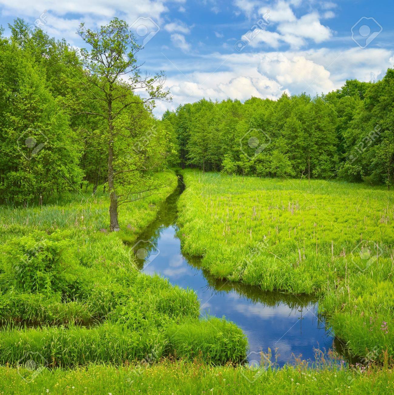 森林と草原の小川を風景します。 の写真素材・画像素材 Image 20059164.