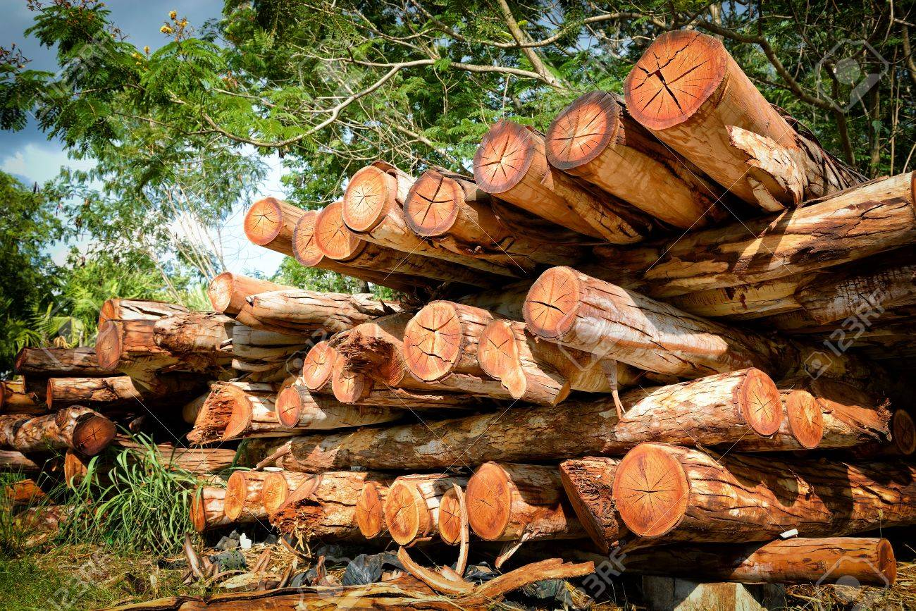 Pile of woods - 22157994