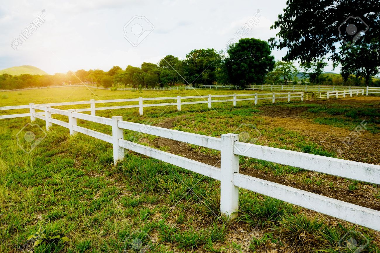 White concrete fence in horse farm field - 22167011